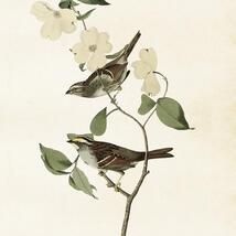 Poster - Fåglar